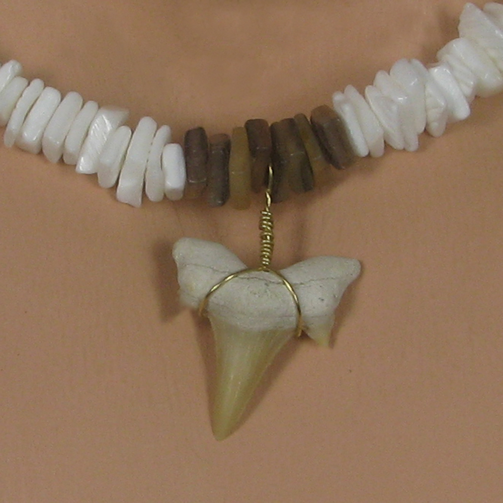 Real fossil shark tooth necklace white gold puka shells great real fossil shark tooth necklace white gold puka shells great replica of skyelor aloadofball Gallery