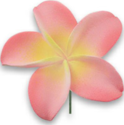 Pink yellow plumeria flower hair clip kanakala pacific trade pink yellow plumeria flower hair clip mightylinksfo